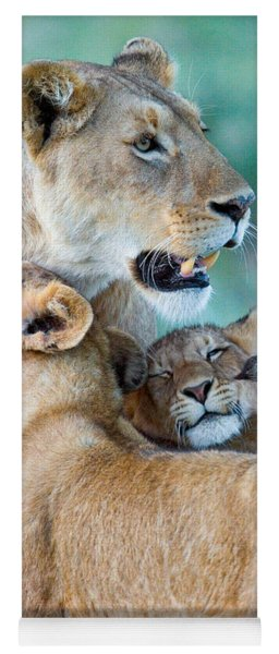 Close-up Of A Lioness And Her Two Cubs Yoga Mat