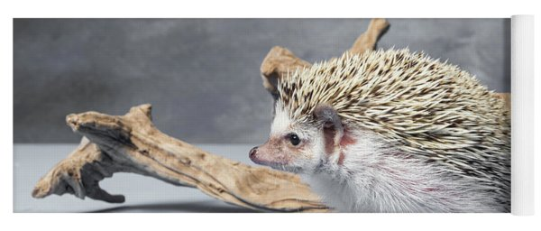 Close-up Of African Pygmy Hedgehog Yoga Mat