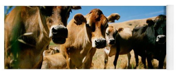 Close Up Of Cows, California, Usa Yoga Mat