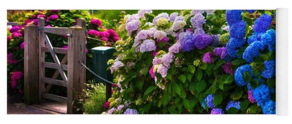 Colorful Hydrangea At The Gate. Giethoorn. Netherlands Yoga Mat