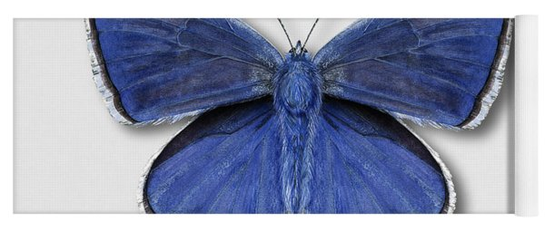 Common Blue Butterfly - Polyommatus Icarus Butterfly Naturalistic Painting - Nettersheim Eifel Yoga Mat