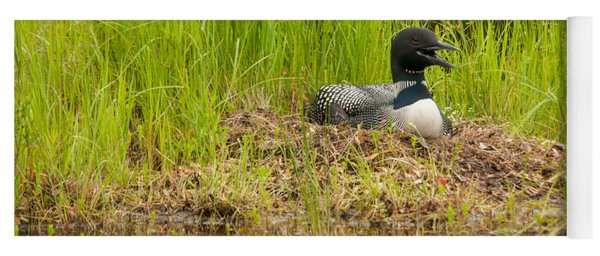 Common Loon Nesting Yoga Mat