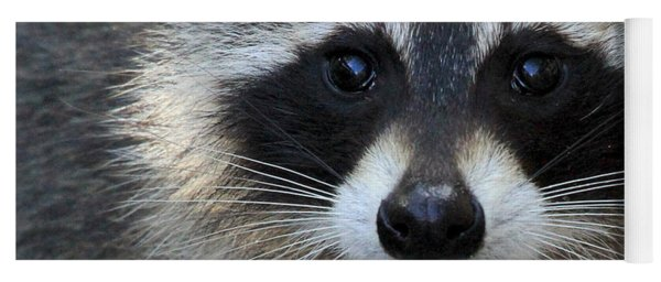 Common Raccoon Yoga Mat