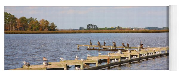 Cormorants And Seagulls On Old Dock Near Blackwater  National Wildlife Refuge Near Cambridge Md Yoga Mat