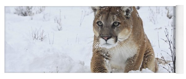 Cougar In Snow Yoga Mat