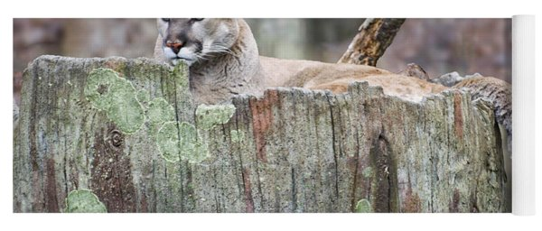 Cougar On A Stump Yoga Mat