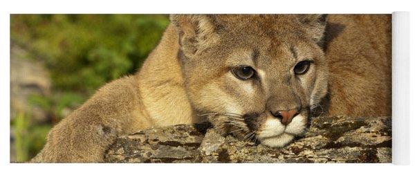 Cougar On Lichen Rock Yoga Mat