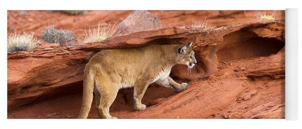 Cougar Or Mountain Lion Yoga Mat