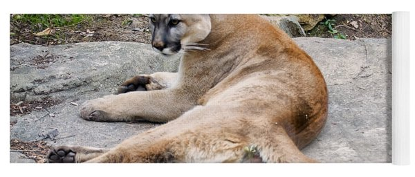Cougar Restin On A Rock Yoga Mat