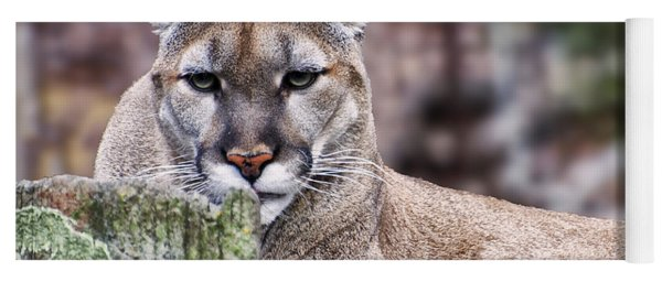 Cougars Stare Close Up Yoga Mat