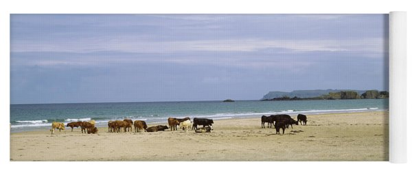 Cows On The Beach, White Rocks Bay Yoga Mat