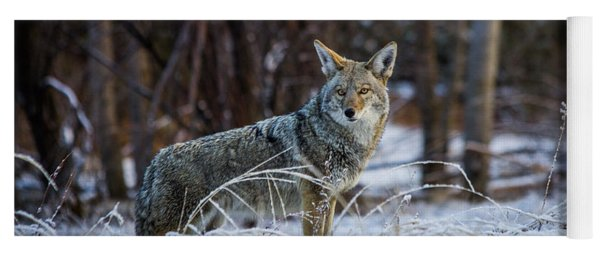 Coyote In The Meadow  Yoga Mat