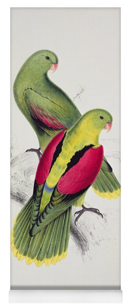 Crimson Winged Parakeet Yoga Mat