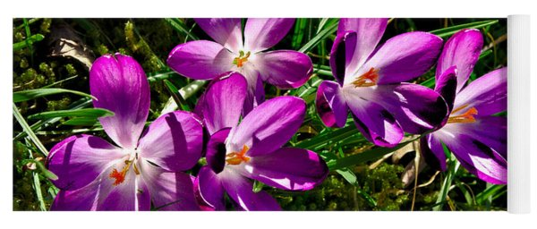 Crocus In The Grass Yoga Mat