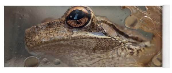 Cuban Treefrog Yoga Mat