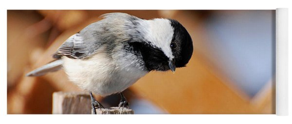 Yoga Mat featuring the photograph Curious Chickadee by Christina Rollo