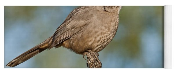 Curve-billed Thrasher Yoga Mat