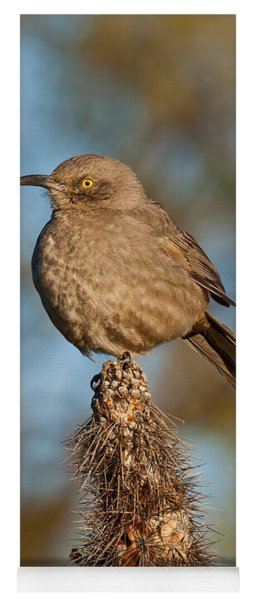 Curve-billed Thrasher On A Cactus Yoga Mat