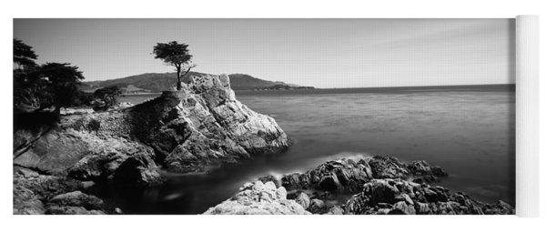 Cypress Tree At The Coast, The Lone Yoga Mat