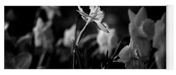 Daffodils In Black And White Yoga Mat