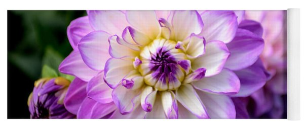 Dahlia Flower With Purple Tips Yoga Mat