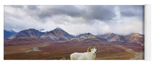 Dalls Sheep Ram Denali National Park Yoga Mat