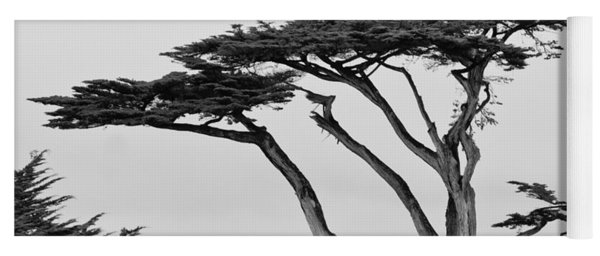 Dark Cypress Yoga Mat