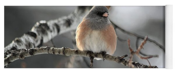 Dark-eyed Junco Yoga Mat