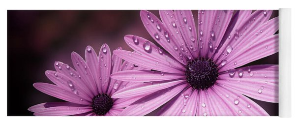 Dew Drops On Daisies Yoga Mat
