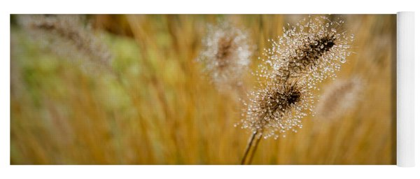 Dew On Ornamental Grass No. 4 Yoga Mat