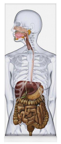 Digestive System, Illustration Yoga Mat