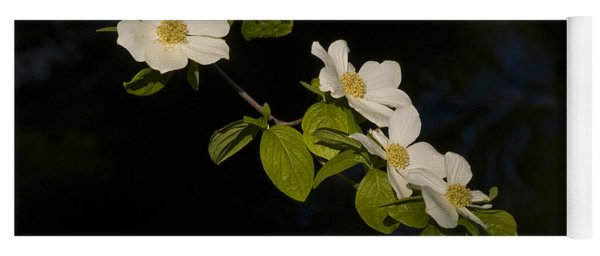 Dogwood On The River Yoga Mat
