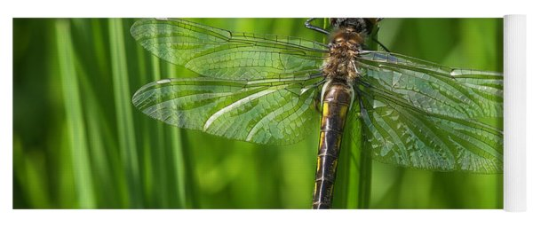 Dragonfly On Grass Yoga Mat