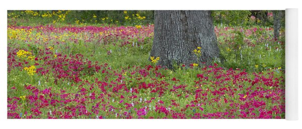 Drummonds Phlox And Crown Tickweed Central Texas Yoga Mat