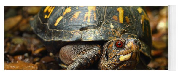 Eastern Box Turtle Yoga Mat