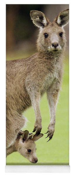 Eastern Grey Kangaroo With Joey Yoga Mat