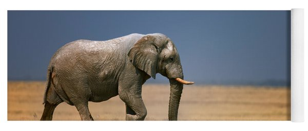 Elephant In Grassfield Yoga Mat