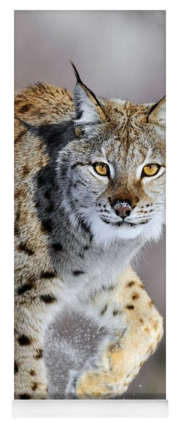 Yoga Mat featuring the photograph Eurasian Lynx Walking by Jasper Doest