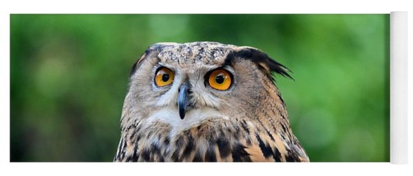 Eurasian Or European Eagle Owl Bubo Bubo Stares Intently Yoga Mat