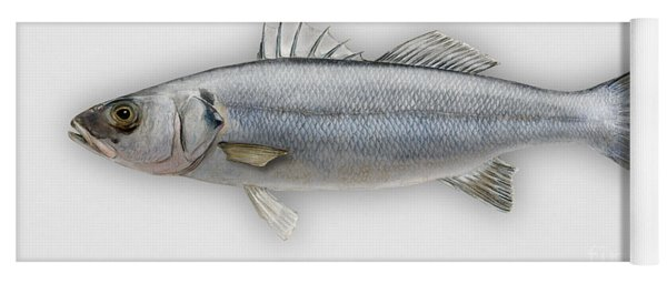 European Seabass Dicentrarchus Labrax - Bar Commun - Loup De Mer - Lubina - Havabor - Seafood Art Yoga Mat