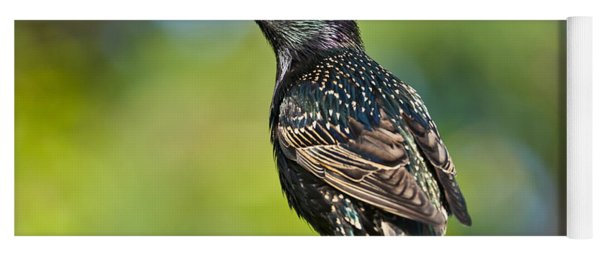 European Starling In A Tree Yoga Mat