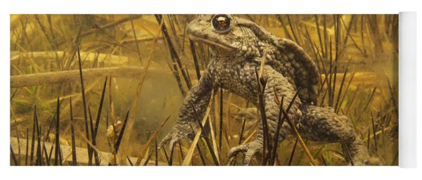 Yoga Mat featuring the photograph European Toad Noord-holland Netherlands by Jan Smit