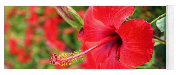Exotic Red Hibiscus By Julia Fine Art Yoga Mat