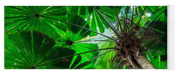 Fan Palm Tree Of The Rainforest Yoga Mat