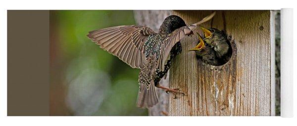Feeding Starlings Yoga Mat