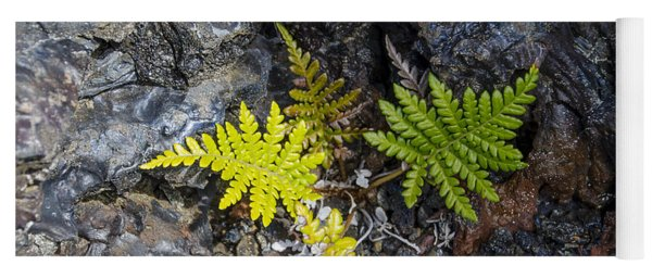 Ferns In Volcanic Rock Yoga Mat
