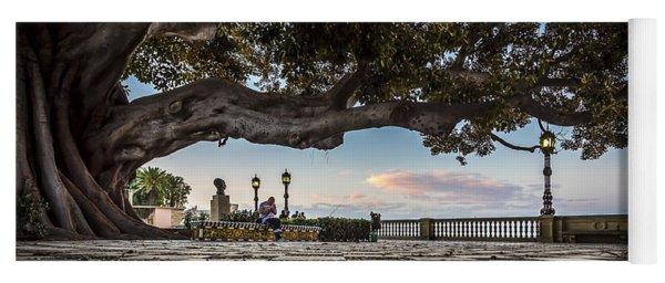 Ficus Magnonioide In The Alameda De Apodaca Cadiz Spain Yoga Mat
