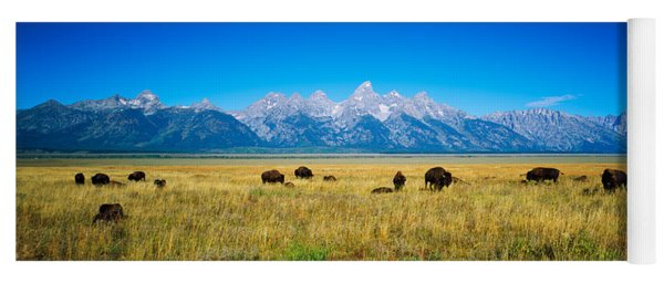 Field Of Bison With Mountains Yoga Mat