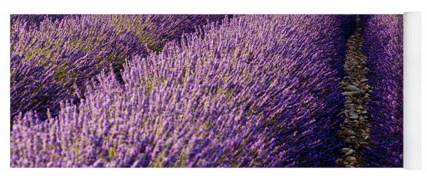 Yoga Mat featuring the photograph Fields Of Lavender by Brian Jannsen
