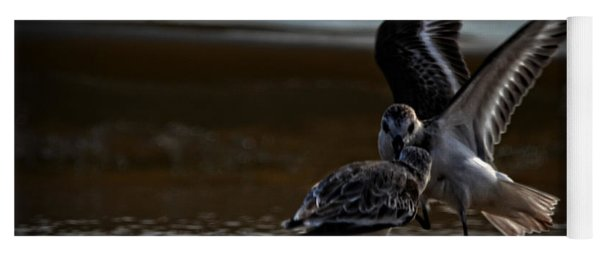 Fighting Sandpipers Yoga Mat